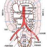 大腸の名称